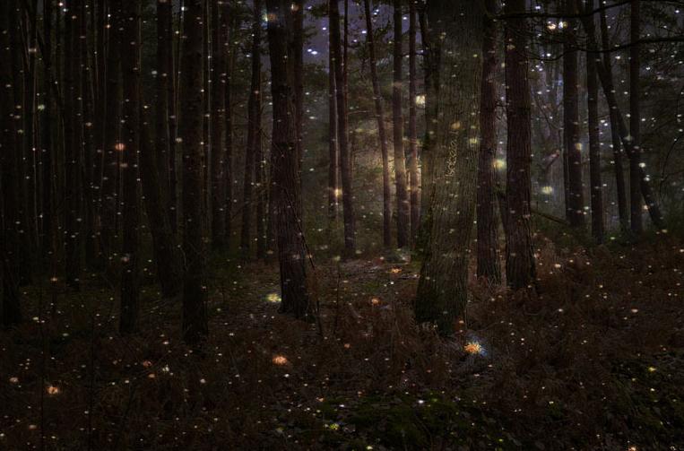 magia lasu, magia natury